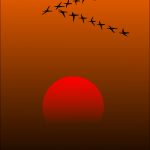 Aves emigrantes: asombrosa manifestación del instinto